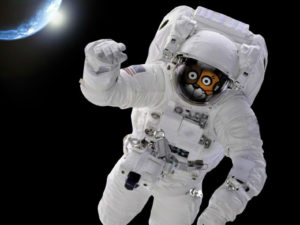 Calico launches into Gravitational's orbit